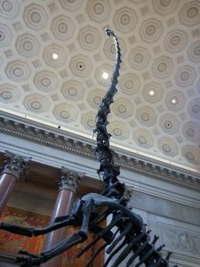 מוזיאון ההיסטוריה של הטבע, ניו יורק