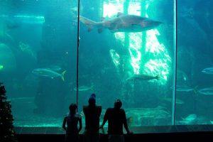 aquarium-1521188